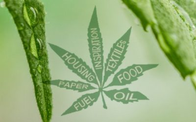 Hemp Oil, Hemp Food, Hempcrete and The Cannabis Revolution