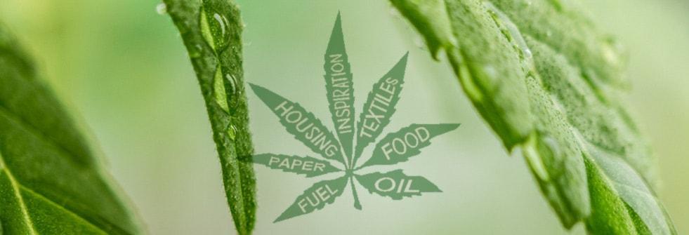 Hemp Oil, Hemp Food, Hempcrete and The Cannabis Revolution